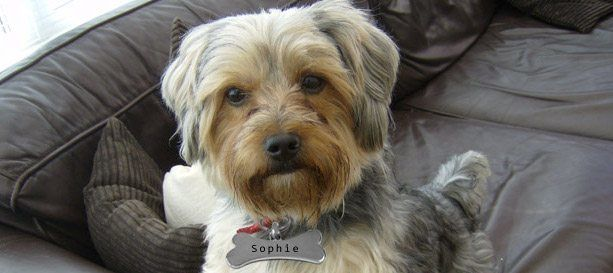 Sophie Dog Tag